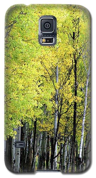 Aspen Splendor Galaxy S5 Case