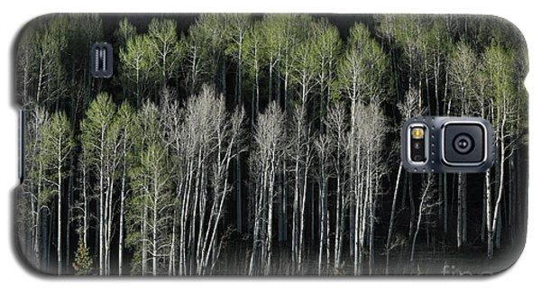 Aspen Spring Galaxy S5 Case
