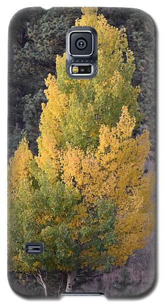 Aspen Tree Fall Colors Co Galaxy S5 Case
