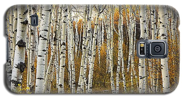 Aspen Tree Grove Galaxy S5 Case by Ron Dahlquist - Printscapes