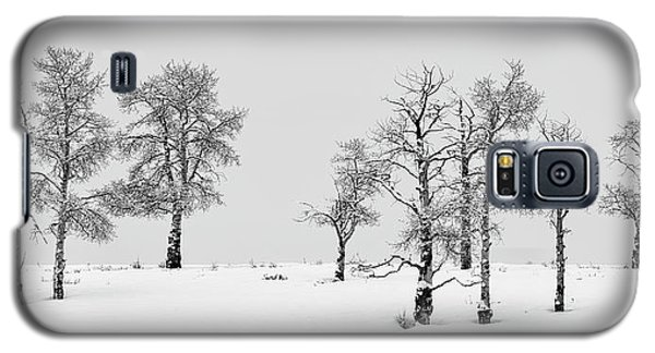 Aspen Tree Line-up Galaxy S5 Case