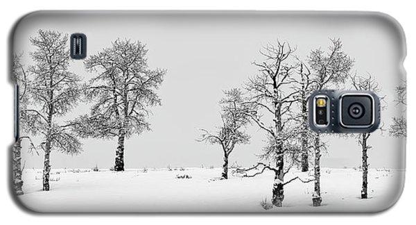 Aspen Tree Line-up Galaxy S5 Case