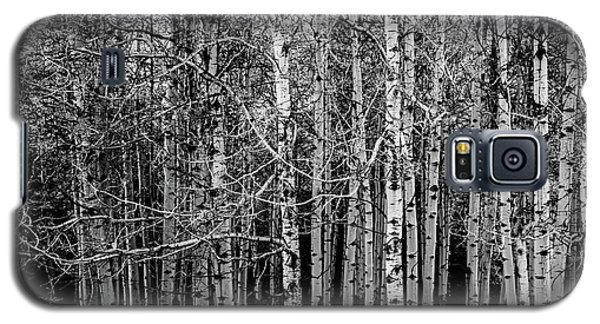 Aspen Trees Canadian Rockies Black And White Galaxy S5 Case