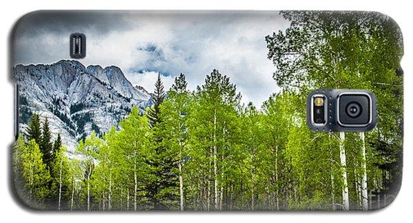 Aspen Trees Canadian Rockies Galaxy S5 Case