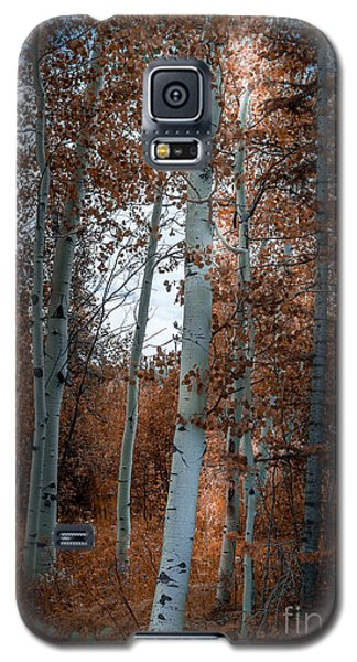 Aspen Trees Ryan Park Wyoming Galaxy S5 Case