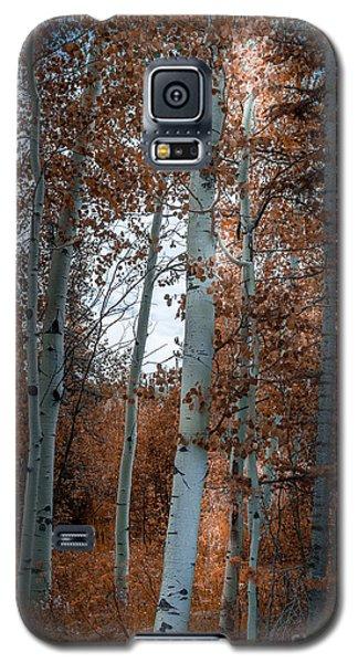 Aspen Trees Ryan Park Wyoming Galaxy S5 Case