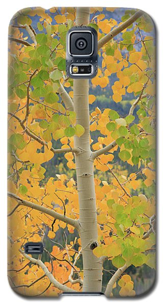 Galaxy S5 Case featuring the photograph Aspen Watching You by David Chandler