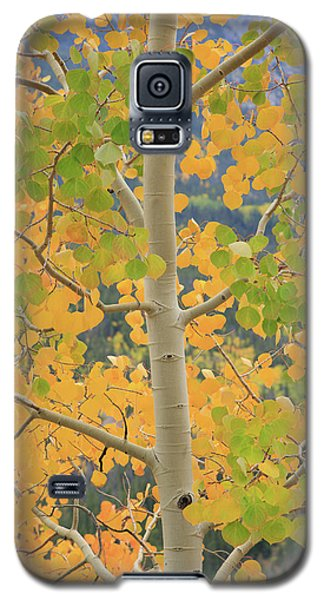 Aspen Watching You Galaxy S5 Case