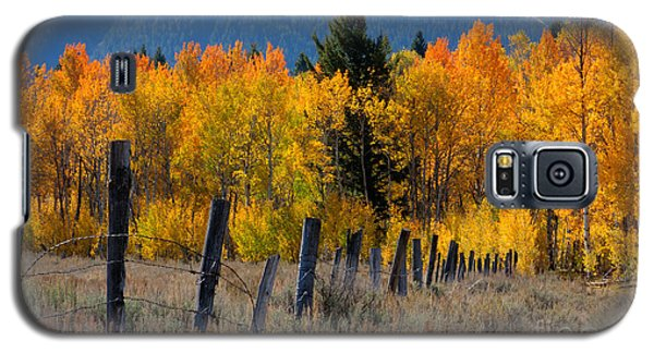 Aspens And Fence Galaxy S5 Case