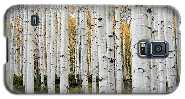Aspens And Gold Galaxy S5 Case