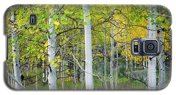Aspens In Autumn 6 - Santa Fe National Forest New Mexico Galaxy S5 Case