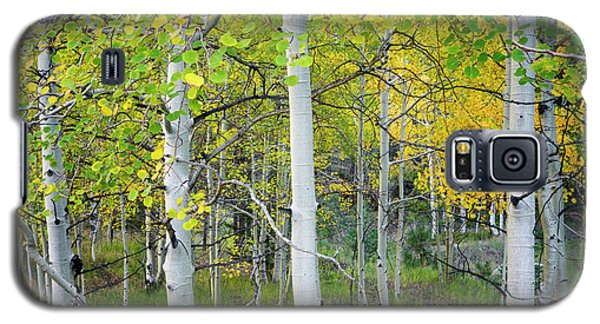 Aspens In Autumn 6 - Santa Fe National Forest New Mexico Galaxy S5 Case by Brian Harig