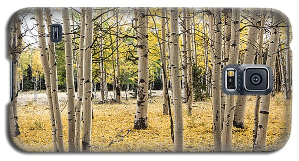Galaxy S5 Case featuring the photograph Aspens In Conejos County In Colorado, Near The New Mexico Border by Carol M Highsmith