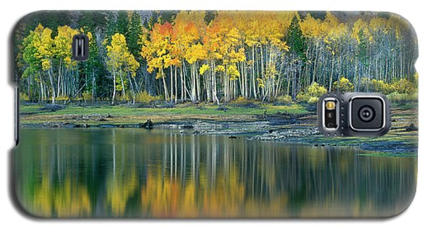 Aspens In Fall Color Along Lundy Lake Eastern Sierras California Galaxy S5 Case