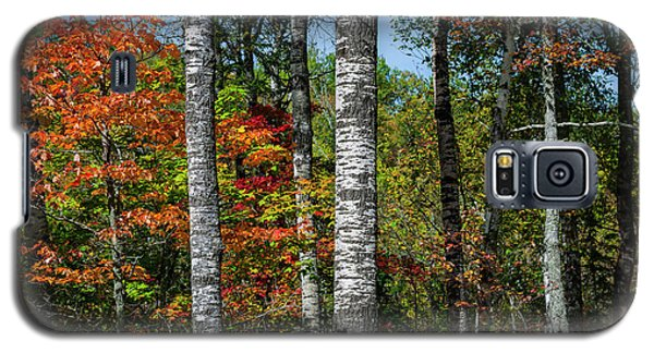 Galaxy S5 Case featuring the photograph Aspens In Fall Forest by Elena Elisseeva