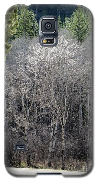 Aspens In Morning Light Galaxy S5 Case
