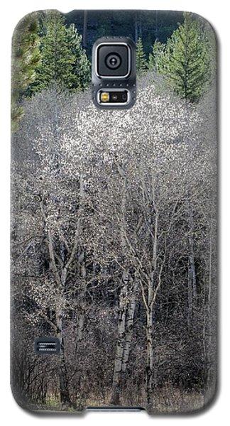 Aspens In Morning Light Galaxy S5 Case