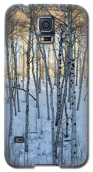 Aspens In Shadow And Light Galaxy S5 Case