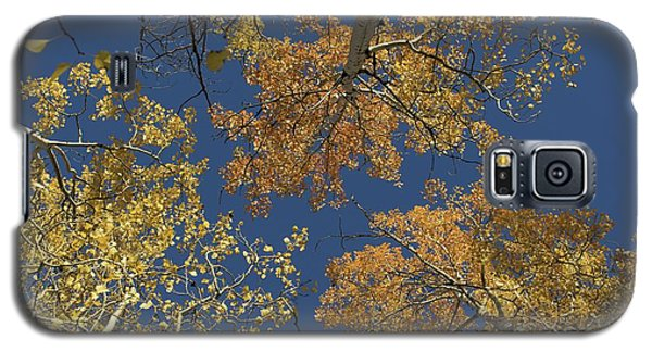 Galaxy S5 Case featuring the photograph Aspens Looking Up by Mary Hone