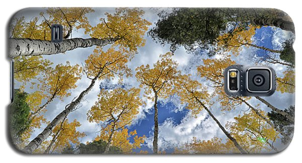 Galaxy S5 Case featuring the photograph Aspens Reaching by Kevin Munro