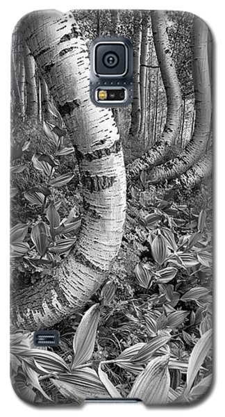 Aspens With Curves Galaxy S5 Case