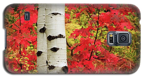 Aspens With Red Maple Galaxy S5 Case