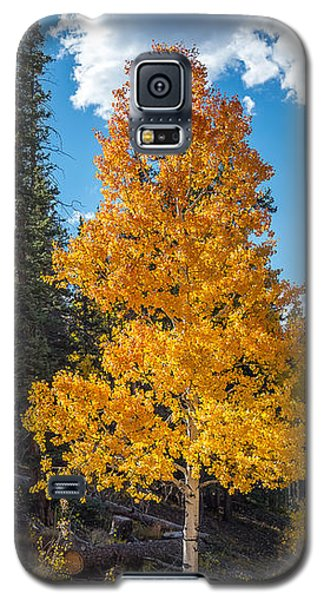 Aspen Tree In Fall Colors San Juan Mountains, Colorado. Galaxy S5 Case