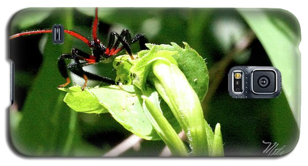 Assassin Bug Galaxy S5 Case