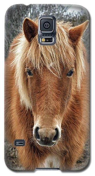 Assateague Island Horse Miekes Noelani Galaxy S5 Case
