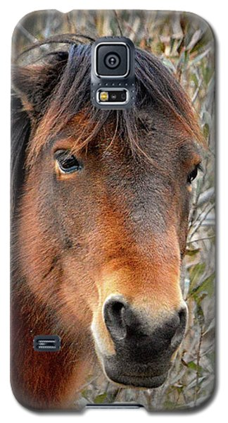Assateague Island Pony Patricia Irene Galaxy S5 Case