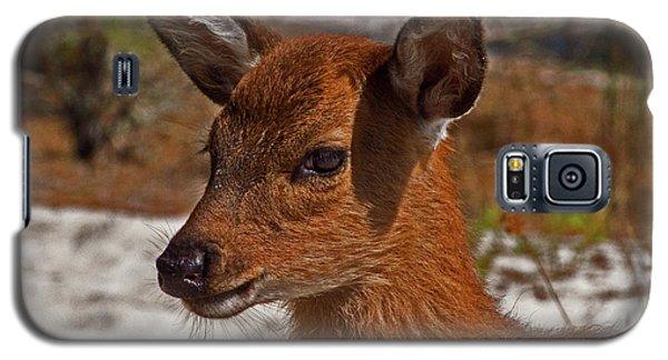 Assateague Island Sika Deer Fawn Galaxy S5 Case
