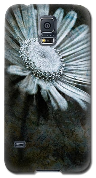 Aster On Rock Galaxy S5 Case by  Onyonet  Photo Studios