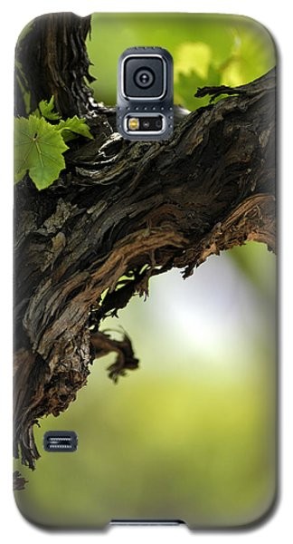 Galaxy S5 Case featuring the photograph At Lachish Vineyard by Dubi Roman
