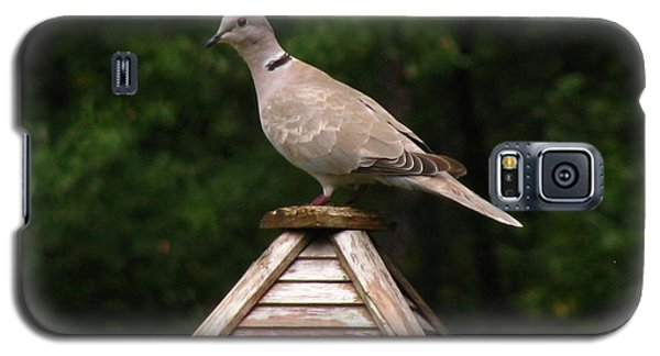 At The Top Of The Bird Feeder Galaxy S5 Case