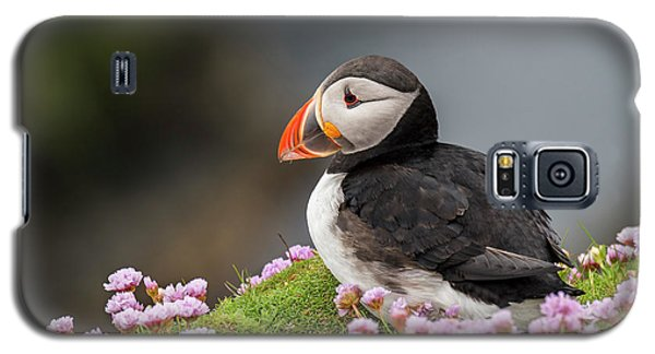 Atlantic Puffin Galaxy S5 Case