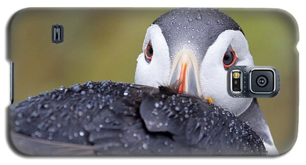 Atlantic Puffin With Rain Drops Galaxy S5 Case