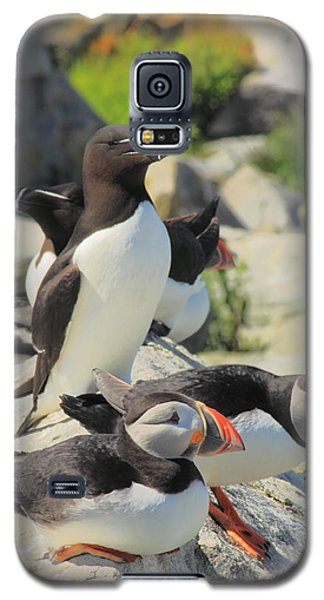 Atlantic Puffins And Razorbill Galaxy S5 Case by John Burk
