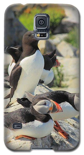 Atlantic Puffins And Razorbill Galaxy S5 Case by John Burk