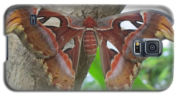Galaxy S5 Case featuring the photograph Atlas Butterfly by Jeepee Aero