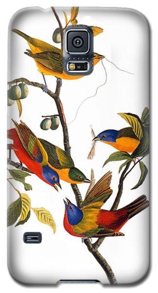 Audubon Galaxy S5 Case - Bunting, 1827 by John James Audubon