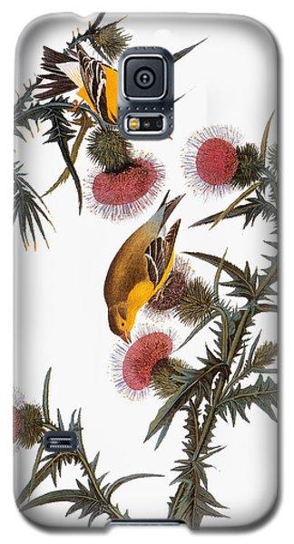 Goldfinch Galaxy S5 Case