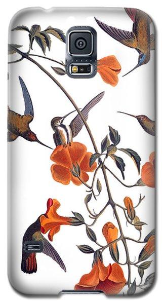 Audubon Galaxy S5 Case - Hummingbird by John James Audubon
