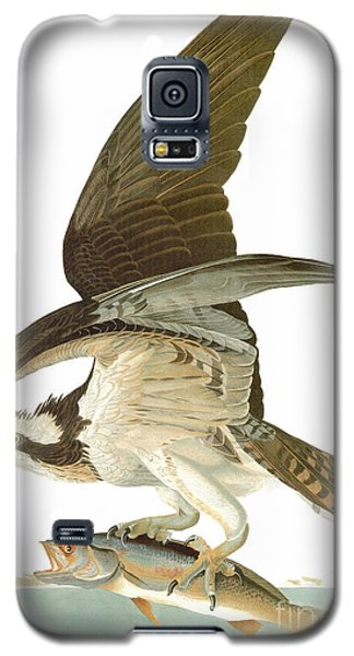 Osprey Galaxy S5 Case - Audubon: Osprey by Granger