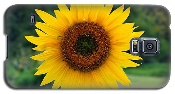 Galaxy S5 Case featuring the photograph August Sunflower by Jeff Severson