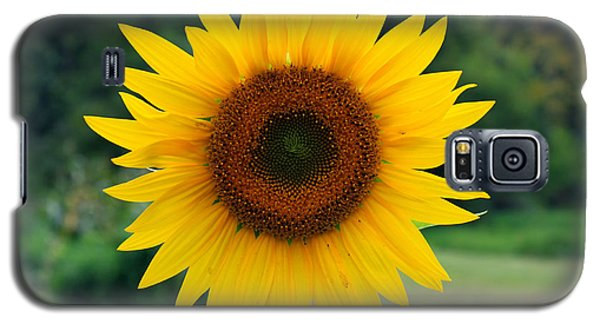August Sunflower Galaxy S5 Case