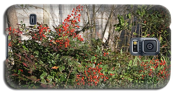 Galaxy S5 Case featuring the photograph Austin Winter Berries by Linda Phelps