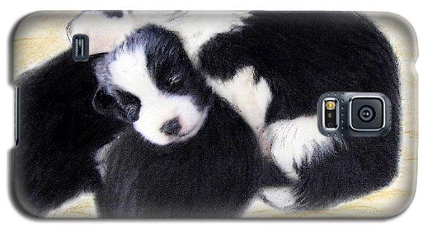 Australian Cattle Dog Puppies Galaxy S5 Case
