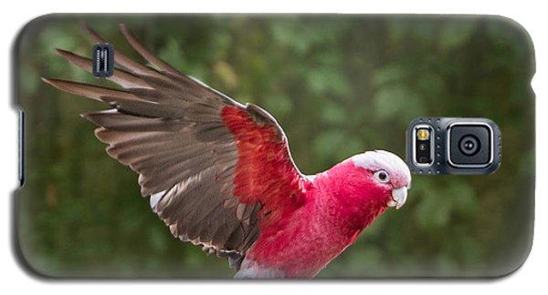 Australian Galah Parrot In Flight Galaxy S5 Case