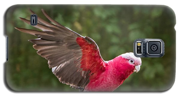 Australian Galah Parrot In Flight Galaxy S5 Case