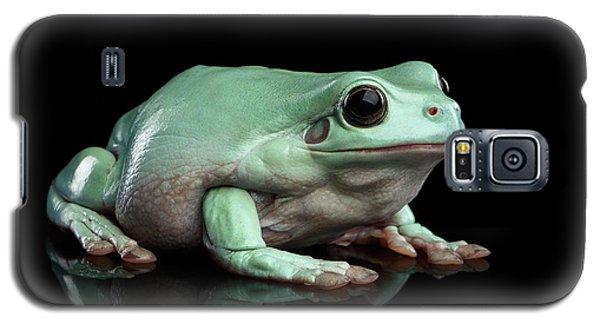 Australian Green Tree Frog, Or Litoria Caerulea Isolated Black Background Galaxy S5 Case